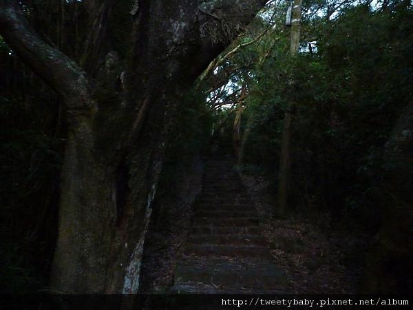 中正山夜景 020.JPG