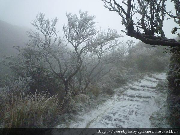 七星山下雪了 155.JPG