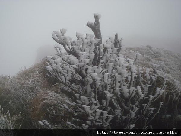 七星山下雪了 029.JPG