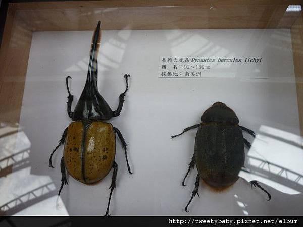 最後一天.青年公園昆蟲展 037.JPG