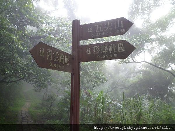 牛埔頭山(五尖山) 045.JPG