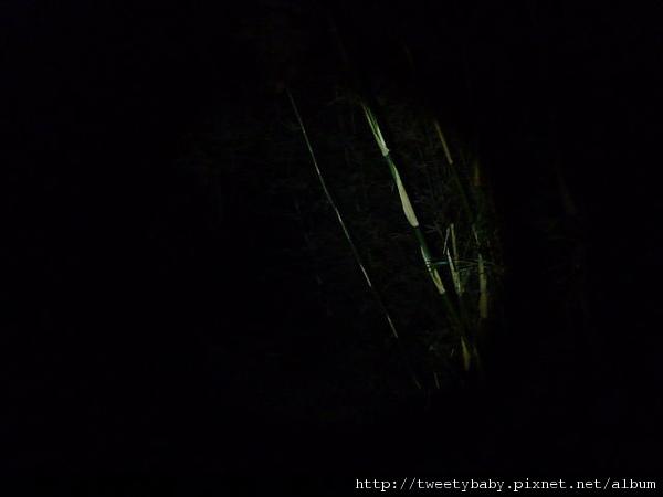 中正山夜景 069.JPG