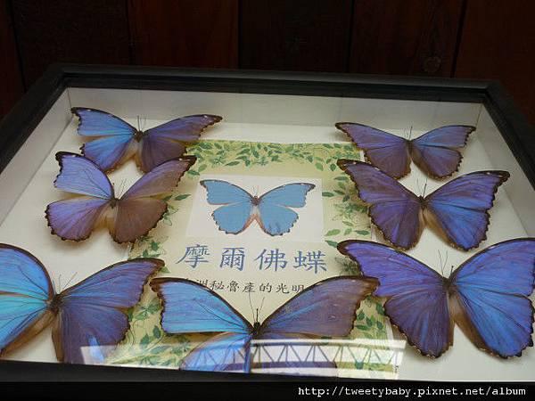 最後一天.青年公園昆蟲展 081.JPG