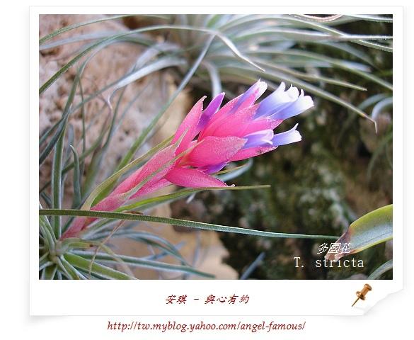 空氣鳳梨6-5 (1).jpg