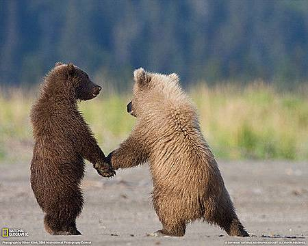 Bear Holding Hands from NG.jpg