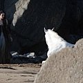 kristen-stewart-snow-white-set-09292011-08.jpg