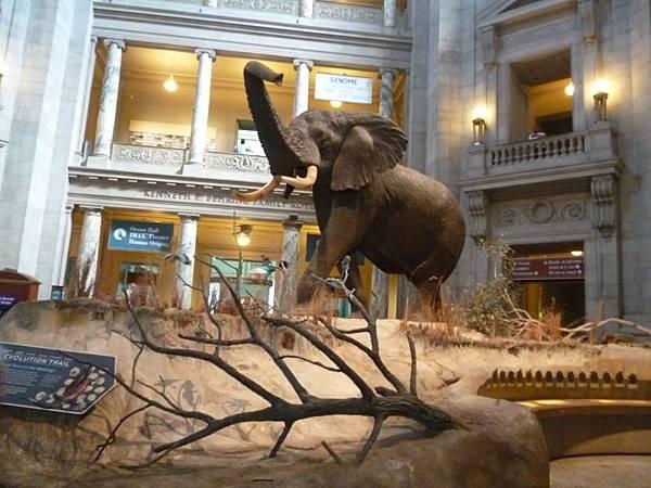 3-38華盛頓史密森尼國家自然歷史博物館.jpg
