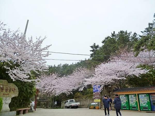 1-1韓國東海龍宮寺 (10)