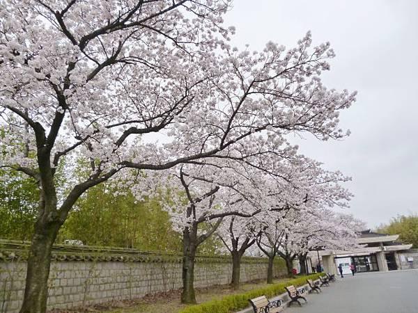 1-1韓國慶州博物館 (0).jpg