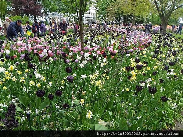 0H庫肯霍夫花園  (2).jpg