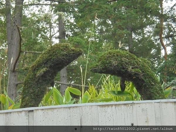 0t加拿大維多利亞布查花園 (25).jpg