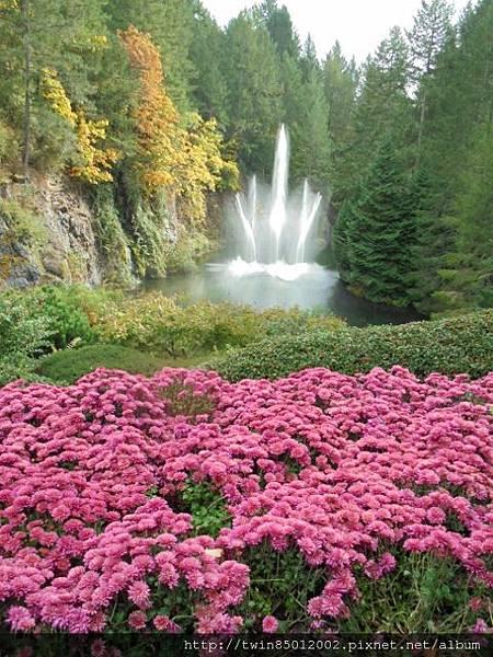 0t加拿大維多利亞布查花園 (20).jpg