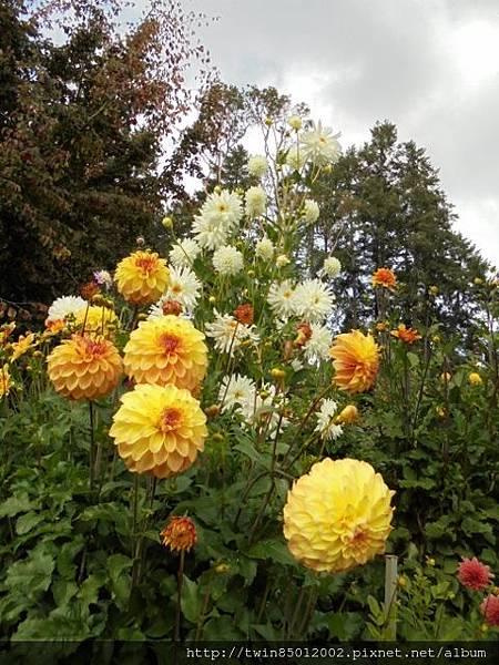 0t加拿大維多利亞布查花園 (33-1).jpg