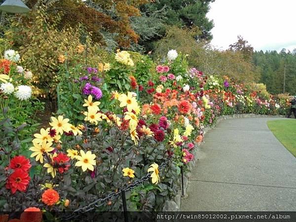 0t加拿大維多利亞布查花園 (35).jpg