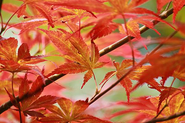 leaves-409759_1280
