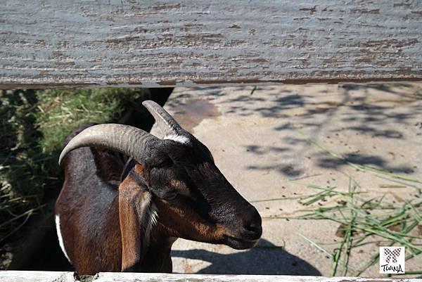 02羊羊-2.jpg