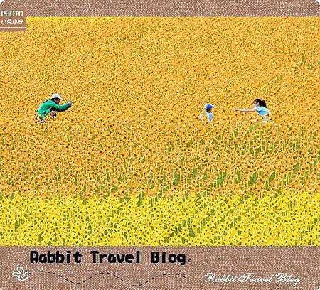 風車黃色小鴨 25
