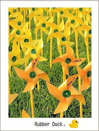 風車黃色小鴨 22
