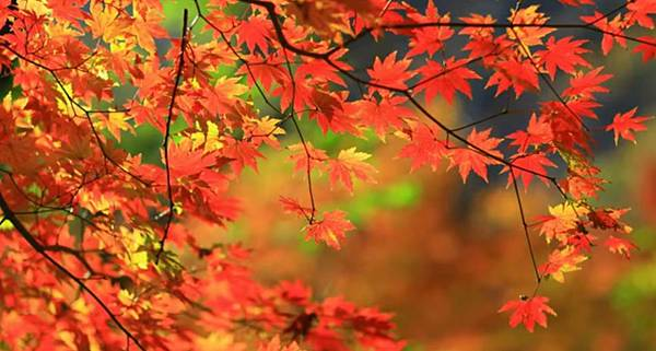 miss flower fall秋1.jpg