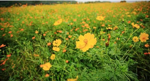 miss flower 夏6.jpg
