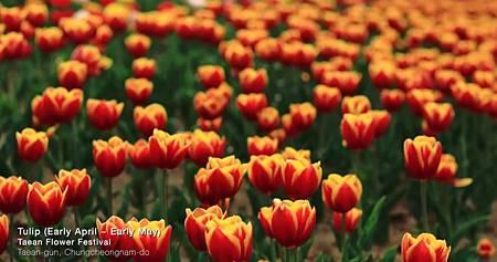 春21.jpg