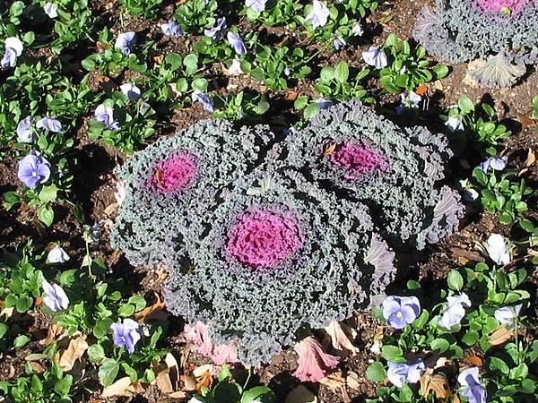 奇怪的花草  看起來好像生菜之類的