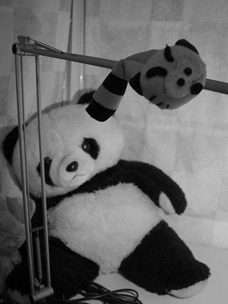 黑白小喵+大熊貓