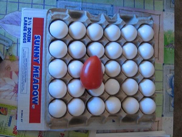 三十顆蛋+美式大顆小蕃茄