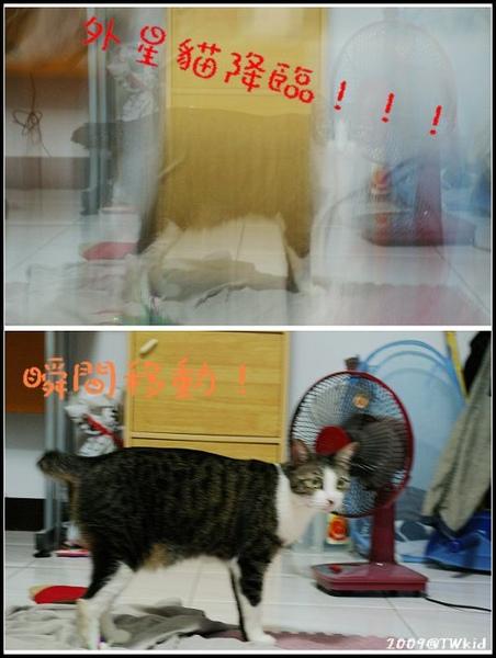 外星貓降臨!