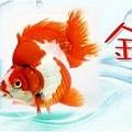 金魚電子報刊頭圖2