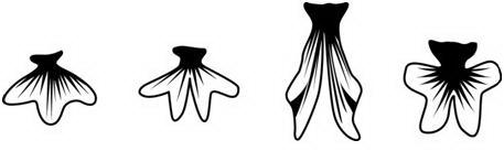 尾鰭形狀1