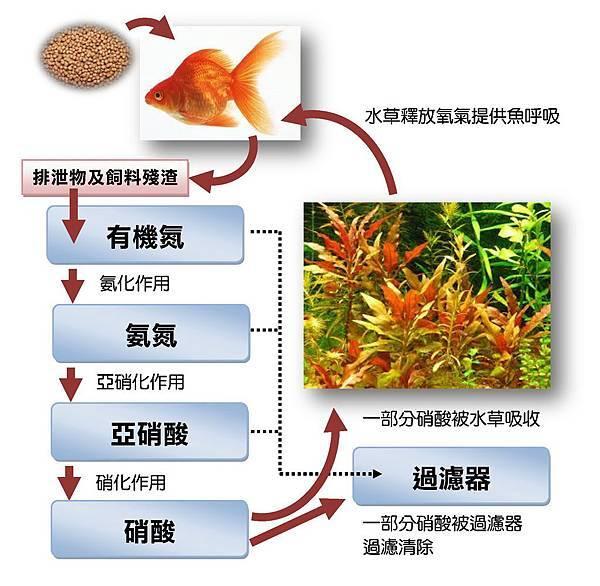 硝化過程1