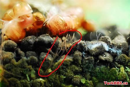 白線蟲2.jpg