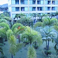 小陽台往外看的樹.JPG