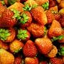 草莓草莓.JPG