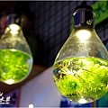 勝洋水草-10