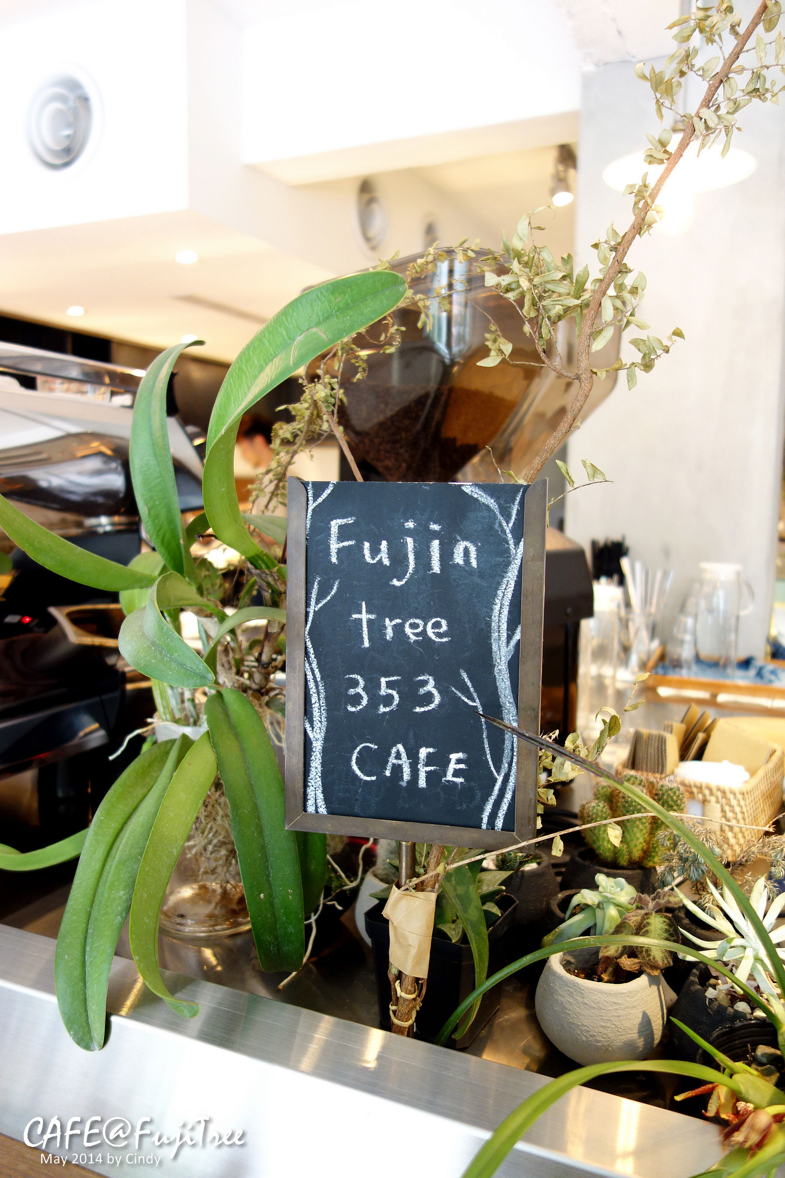 Fuji Tree-09.jpg