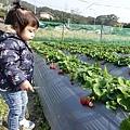 0117-關西採草莓-002.jpg