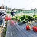 0117-關西採草莓-003.jpg
