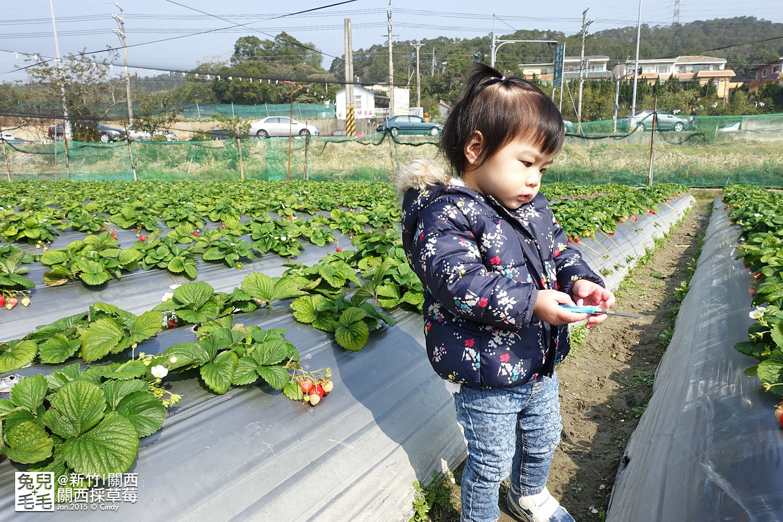 0117-關西採草莓-004.jpg