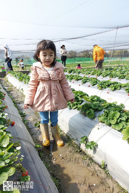 0117-關西採草莓-006.jpg