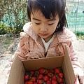 0117-關西採草莓-008.jpg