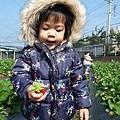 0117-關西採草莓-010.jpg