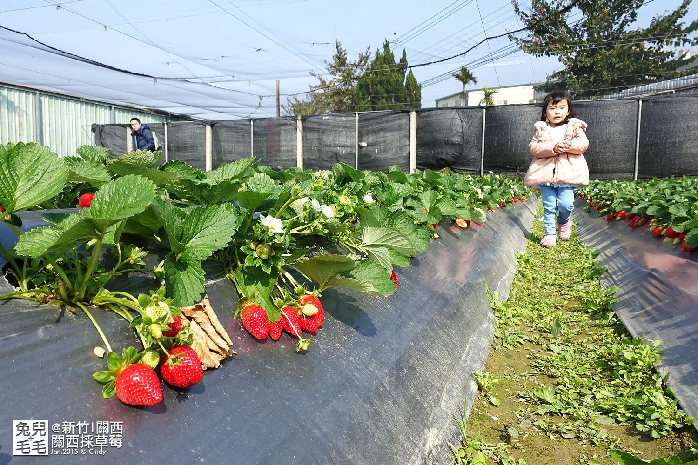 0117-關西採草莓-013.jpg