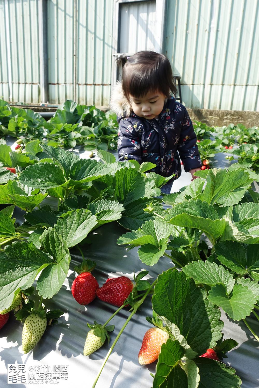 0117-關西採草莓-015.jpg