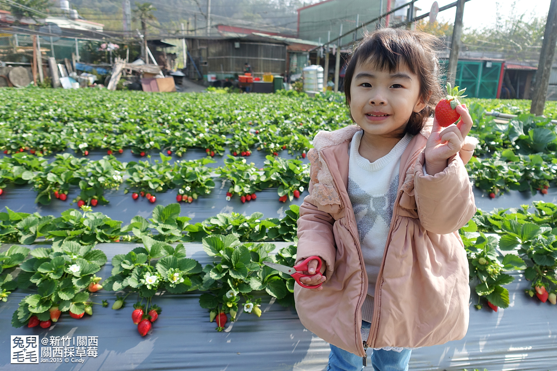 0117-關西採草莓-016.jpg