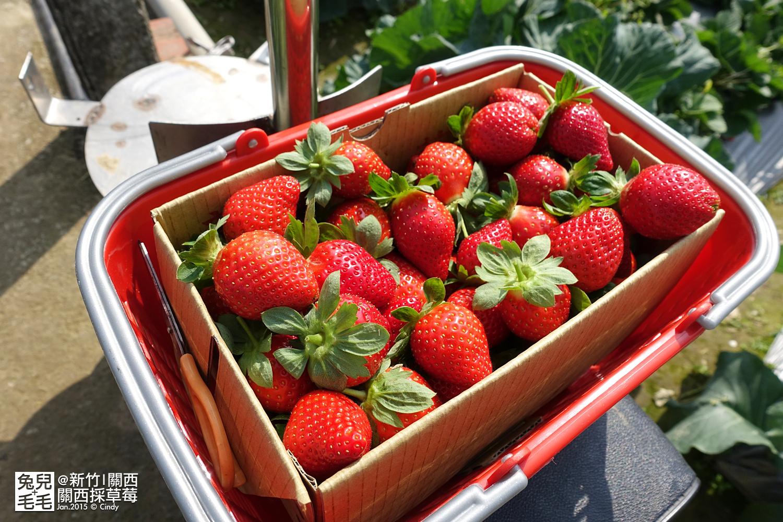 0117-關西採草莓-017.jpg