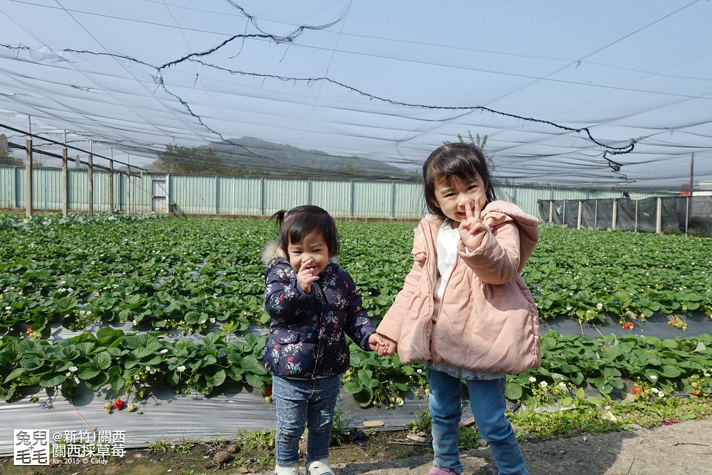 0117-關西採草莓-019.jpg