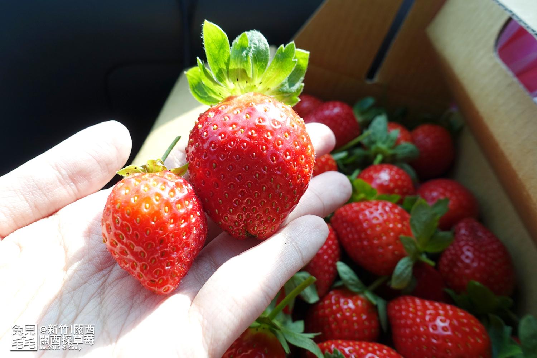 0117-關西採草莓-020.jpg