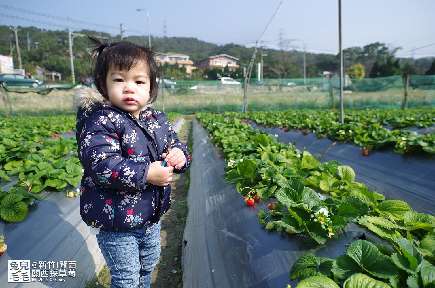 0117-關西採草莓-022.jpg